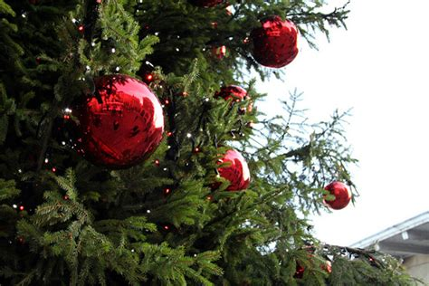 Bring your ornament for the outdoor Christmas tree